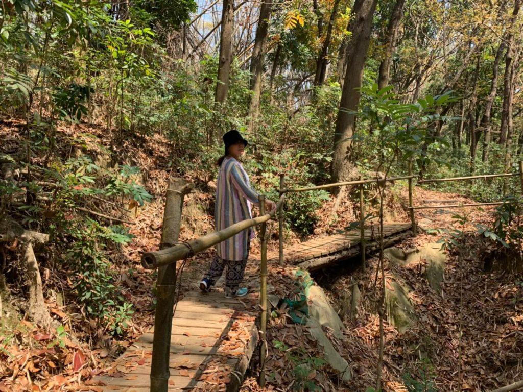 台南新化林場木棧道