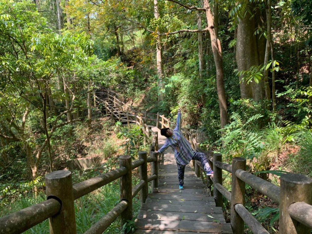 台南新化林場木頭步道