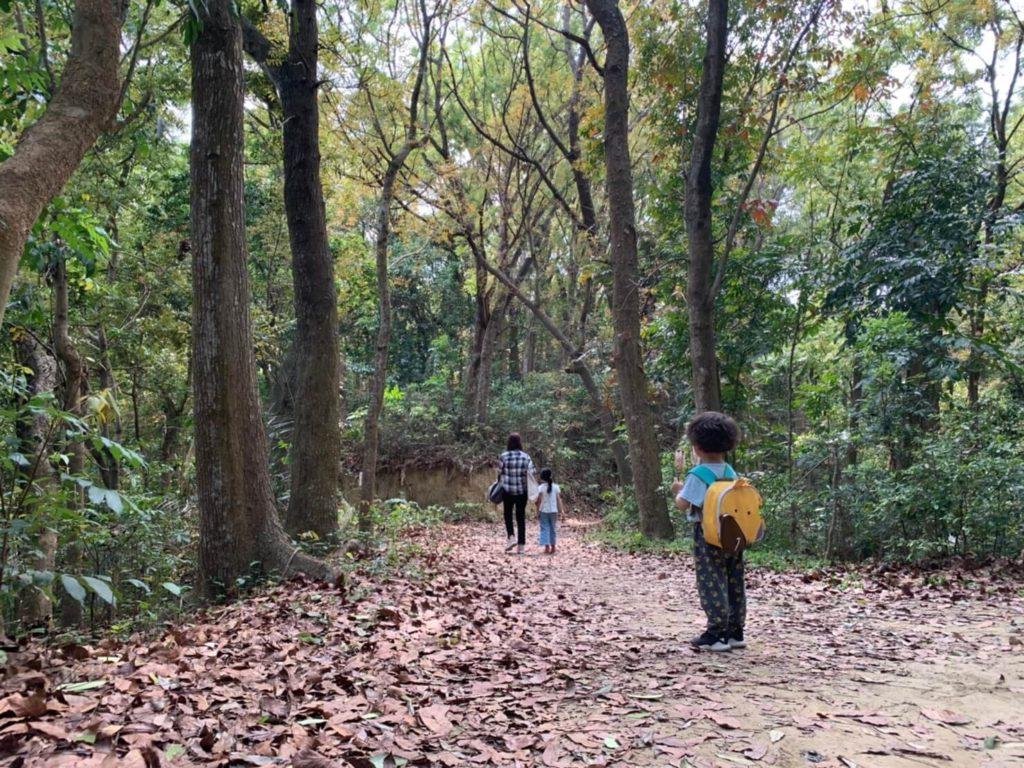 台南新化林場步道